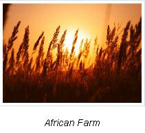 African Farm