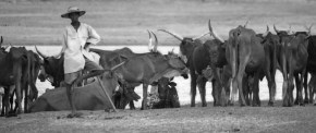 Reducing the vulnerability of dryland pastoralism