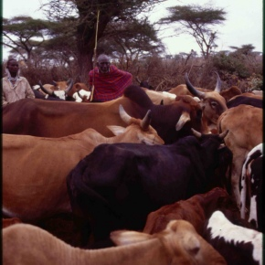 New USD18 million program to modernize livestock breeding in East Africa