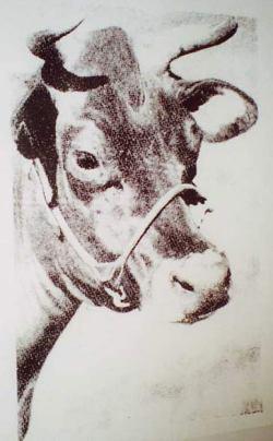 Warhol_cow-3