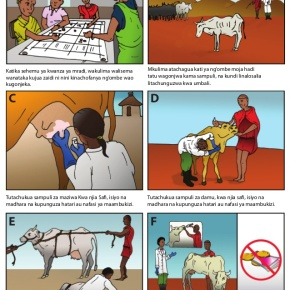 On more rigorous informed consent in One Health cross-cultural livestock research