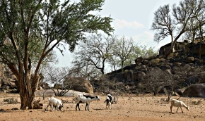 Farmers coping with on-going drought in southern Africa need better weather advice and insurance
