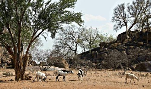 zimbabwegoats_cropped