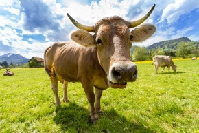 Livestock count: Live reporting from the 43rd session of the Committee on World FoodSecurity