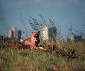 'Extreme declines' in wildlife populations in Kenya over past 4 decades—Newstudy