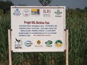US ambassador to Burkina Faso visits ILRI-led Feed the Future Sustainable Intensification Innovation Labproject