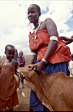 Kenyan herding families that vaccinate their cattle against disease send more daughters to school—New study