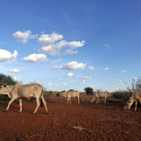 New USAID grant to asses projects aiming to reduce poverty and the need for food aid in Kenya's drylands