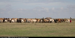 Livestock-wildlife coexistence tested in Laikipia, Kenya, with on-going drought andconflicts
