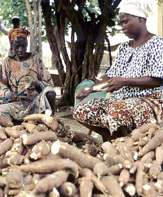 USAID supports the commercial potential of cassava peel for