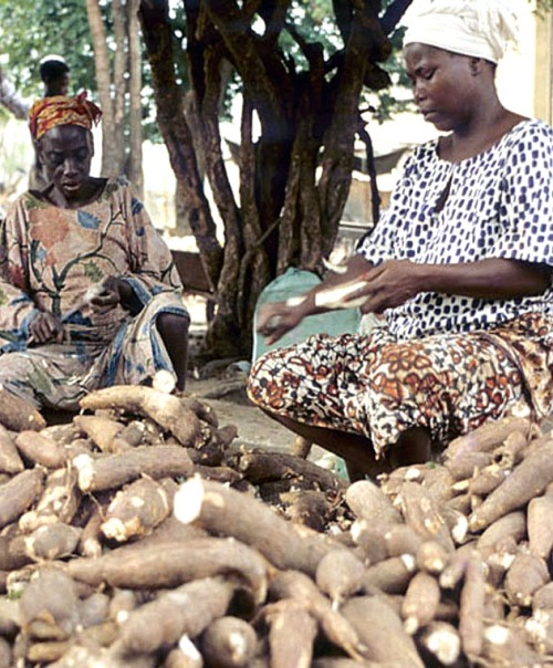 Women peeling cassava roots in a cassava processing center. Photo by IITA. (file name: CA_339). ONLY low res available.