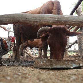 Transforming pastoral pursuits into profitable livestock enterprises in southernAfrica