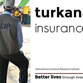 Expanding livestock insurance coverage in Turkana—and across all of Kenya's great dryland pastoralcommunities