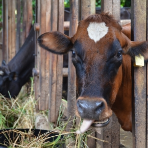 Cleaning up assessments of livestock-environment systems in developing countries withCLEANED