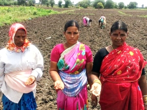 Investigating fodder as a cash crop—a micro-enterprise for Indian dairy women