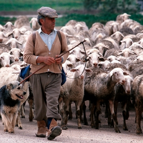 Mobile pastoralism—A 10,000-year-old practice still robust, if threatened, in the Mediterranean today