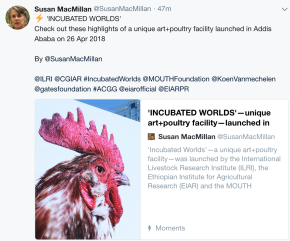'INCUBATED WORLDS': Highlights of a unique art+poultry facility launched in Addis Ababa