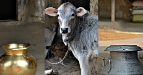 India's northeast Bihar State gears up to approve and implement a 'livestock master plan'