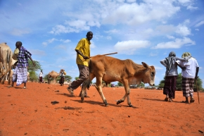 Northern Kenya-southern Ethiopia dryland livestock traders gathered in Marsabit for better livestock trade and market links