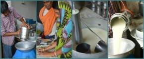 A 'milk start-up' aims to modernize India's massive informal dairy economy in Odisha State