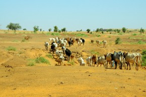 Four major livestock investment opportunities highlighted at Burkina Faso national planning conference