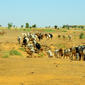 Four major livestock investment opportunities highlighted at Burkina Faso national planningconference