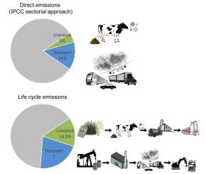 FAO on the common but flawed comparisons of greenhouse gas emissions from livestock andtransport