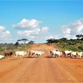 Tracking Ethiopia's livestock emissions to identify low-carbon development pathways