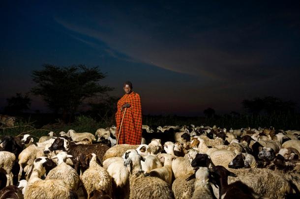 SheepUganda