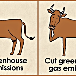 (Enteric methane) greenhouse gas emissions in cows are cut 25% with feed supplement (3-NOP)