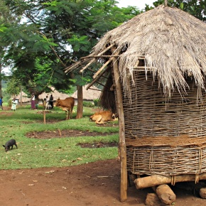 Poor communities: Ground zero for emerging animal-to-human diseases—and for the existential crises theybeget