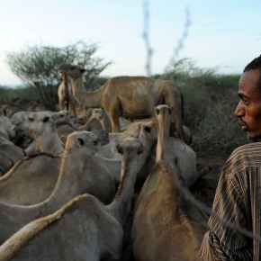 Do Kenya's camel handlers face a threat from MERS? What we found