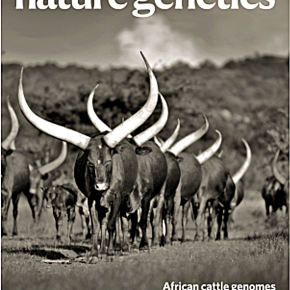 'Genomic time travel' for better African cattle—New paper describes a 'rich mosaic of traits' and an 'evolutionary jolt'
